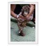 I Love Orangutans Baby Jackat Greeting Card