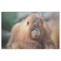 I love Orangutans Fabric