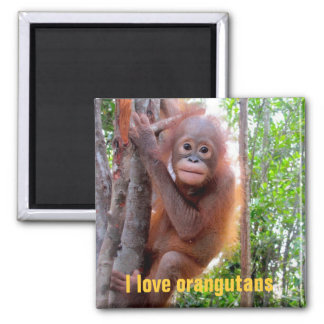 I Love Orangutans with Baby Uttuh 2 Inch Square Magnet