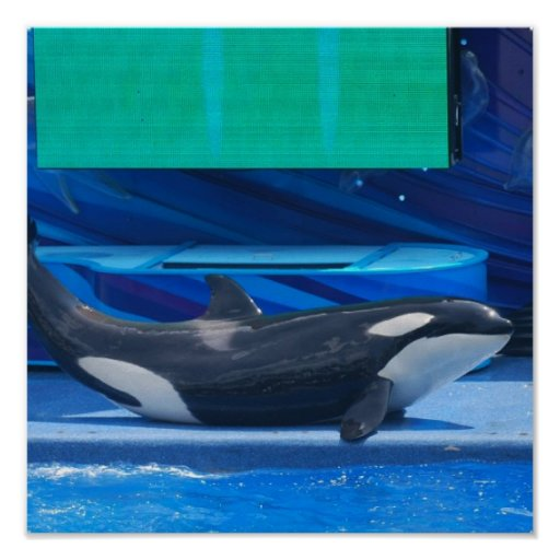 I Love Orcas Poster