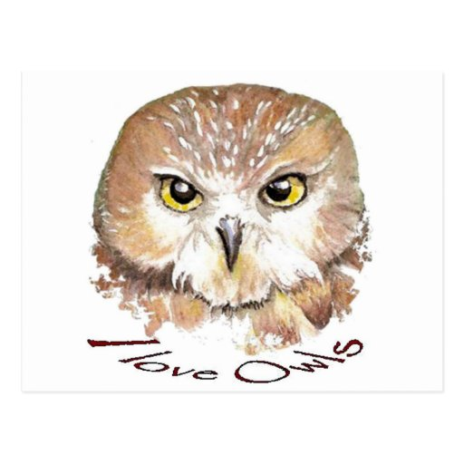 I love Owls, Saw Whet Bird Post Card