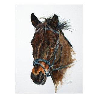 I Love Ponies Postcard