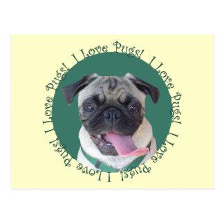 I Love Pugs! Postcard