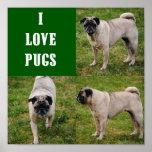 I Love Pugs Poster