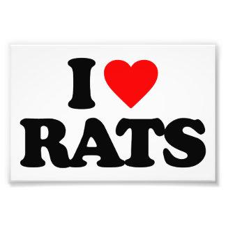 I LOVE RATS PHOTO PRINT