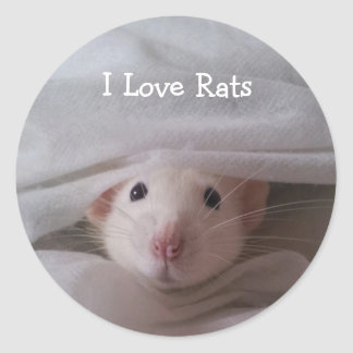 I Love Rats Stickers