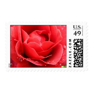 I Love Roses Stamp