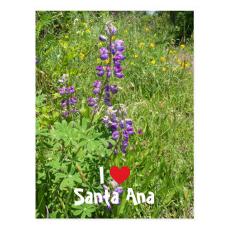 I Love Santa Ana Postcard