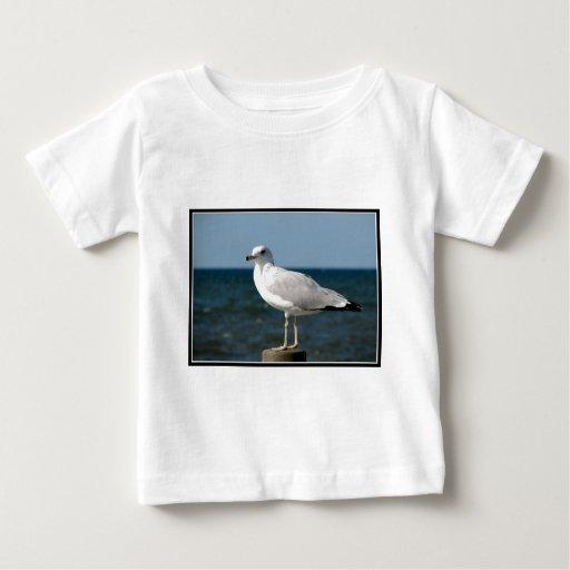I love Seagulls! Baby T-Shirt