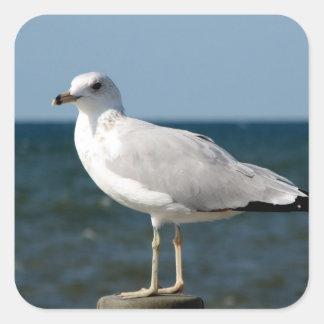 I love Seagulls! Square Sticker