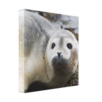I Love Seals Canvas Print