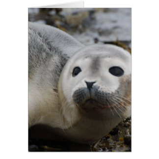 I Love Seals Greeting Cards