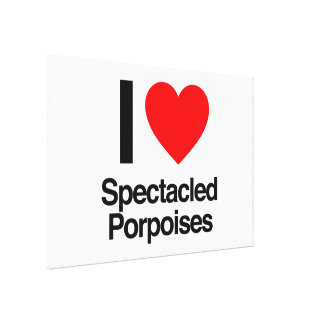 i love spectacled porpoises stretched canvas prints