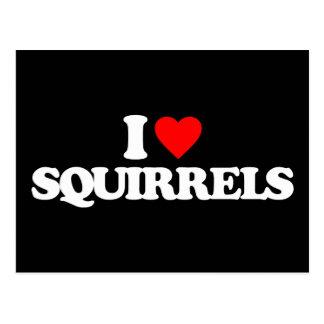 I LOVE SQUIRRELS POSTCARD