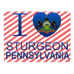 I Love Sturgeon, PA Postcard