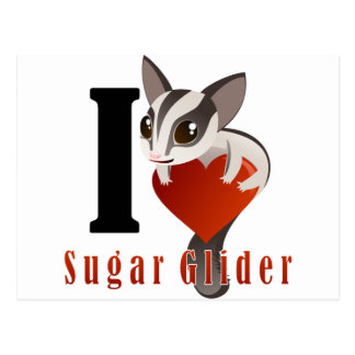 I Love Sugar Glider Postcard