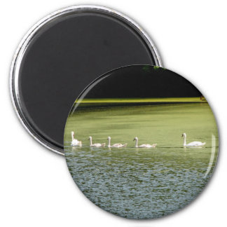 I love swans! 2 inch round magnet