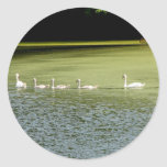 I love swans! classic round sticker