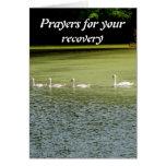 I love swans! greeting card