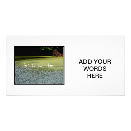 I love swans! photo card template