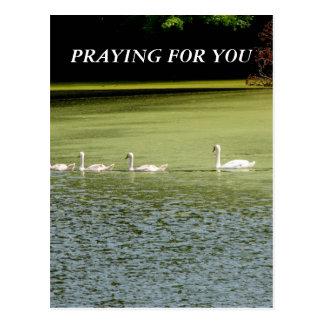 I love swans! postcard