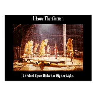 I Love the Circus! Trained Tigers Postcard