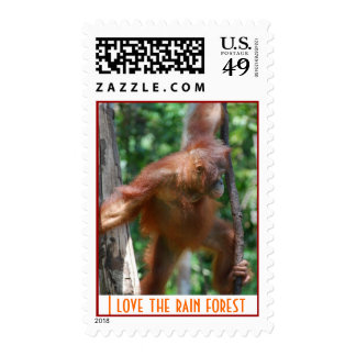 I Love the Rain Forest Stamps