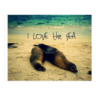 I love the Sea quote beach with sea lions Postcard