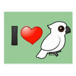 I Love Umbrella Cockatoos Postcard