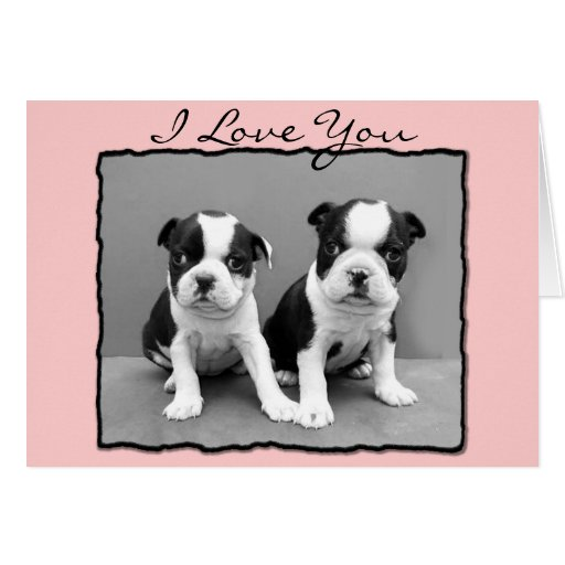 I Love You Boston Terriers greeting card
