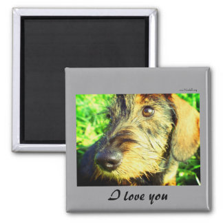 I love you - cute wired hair Dachshund face 2 Inch Square Magnet