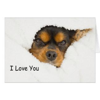 I Love You King Charles Spaniel Peeking Out Card