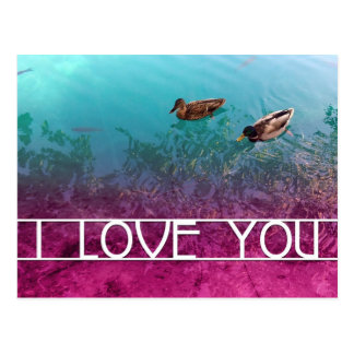 i love you : pair of ducks post cards
