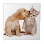 I Love You!  Puppy Kisses Surprised Kitten! Ceramic Tiles
