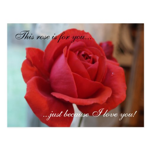 """I Love You"" Red Rose Postcard"