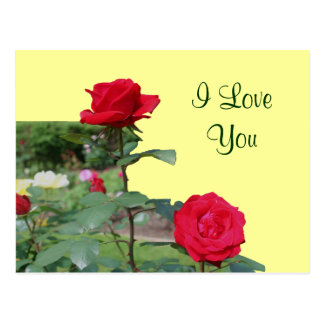 I Love You Red Roses Flower Photo Postcard