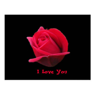 I Love You Rose Postcard