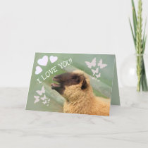 I LOVE YOU! Sheep Valentine's Day Holiday Card