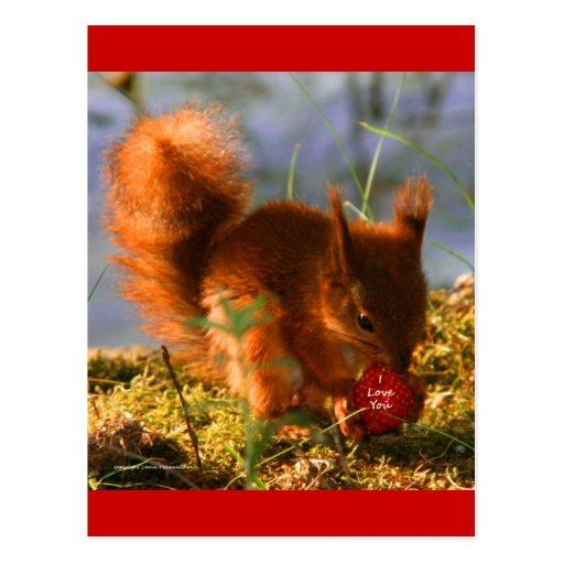 I Love You Strawberry Postcard