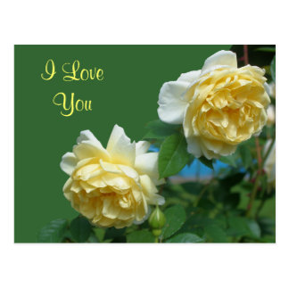 I Love You Yellow Roses Flower Photo Postcard