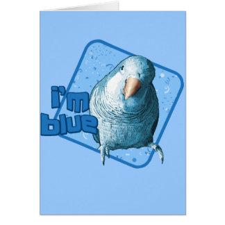 I m Blue Quaker Parakeet Card