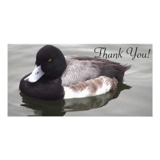 I'm Really A Greater Scaup Card