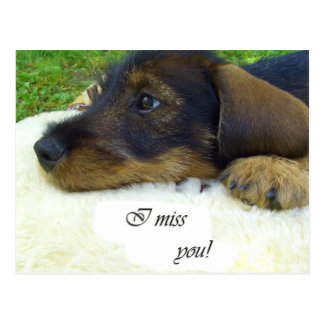 I miss you - Cute Dachshund Postcard