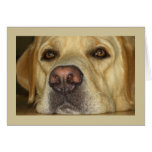 I miss you - Cute Yellow Labrador Card