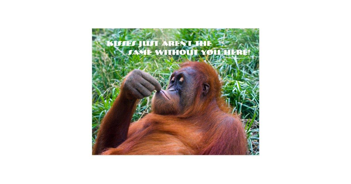 I Miss You Funny Orangutan Postcard | Zazzle