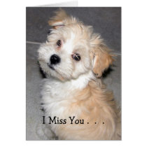 I Miss You . - Havanese puppy Card