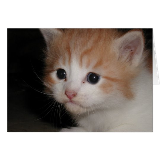 I miss you kitty Notecard