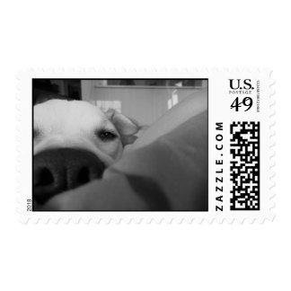 I miss you postage stamp