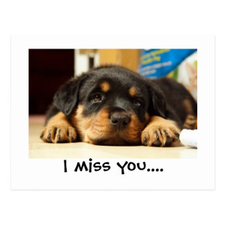I miss you pubby postcard