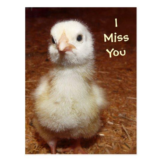I Miss You Sad Baby Chick Postcard Zazzlecom